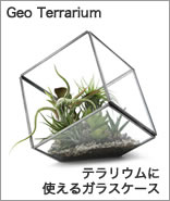 テラリウムに使えるガラスケース。